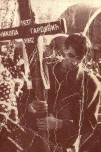 nikola gardovic